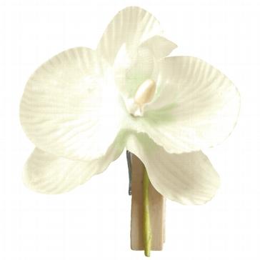 """Deko-klammer """"Orchidee"""" in Creme"""