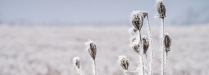 1503581411930-winterhochzeit-winterlandschaft.jpg