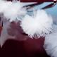 Autodeko Hochzeit Pompom Girlande, 3 St., weiß