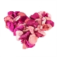 Rosenblätter rosa pink herz