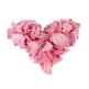 Rosenblätter rose herz