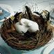 Tortenfigur Love Birds - Dekobild
